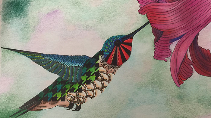 Illustration of hummingbird and flower by Patricia Hilton
