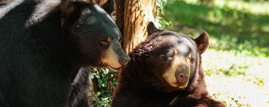 Bring family and friends to visit Bear Country at Dickerson Park Zoo Sept. 27, and enjoy half-price admission by wearing BearWear.