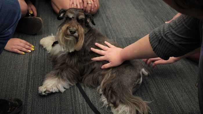 Pet Therapy @ Meyer Library